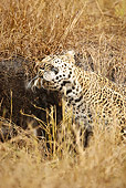 LEP 60 MC0014 01