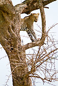 LEP 60 MC0019 01