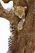 LEP 60 MC0022 01