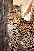 LEP 60 MC0025 01