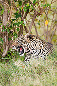LEP 60 MC0036 01