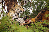 LEP 60 MC0039 01