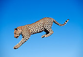 LEP 60 MH0003 01