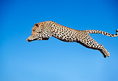 LEP 60 MH0004 01