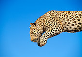 LEP 60 MH0005 01