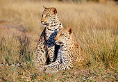 LEP 60 MH0006 01