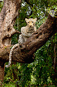 LEP 60 MH0007 01