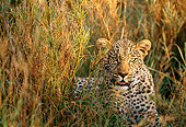 LEP 60 DB0001 01