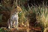 LEP 60 DB0004 01
