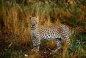 LEP 60 DB0005 01