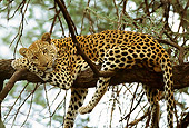 LEP 60 DB0009 01