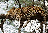LEP 60 DB0009 02
