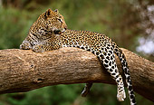 LEP 60 DB0011 01