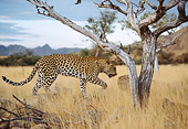 LEP 60 DB0016 01