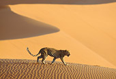 LEP 60 DB0017 01
