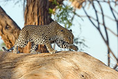 LEP 60 RW0001 01