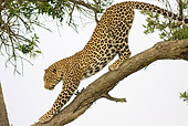 LEP 60 RW0003 01