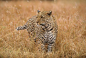 LEP 60 TL0002 01