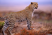LEP 60 TL0003 01