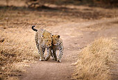 LEP 60 TL0004 01
