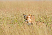 LNS 01 AC0005 01