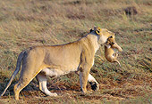 LNS 01 GL0003 01