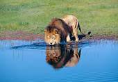 LNS 01 GL0004 01