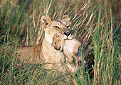 LNS 01 GL0013 01
