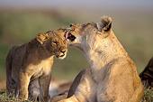 LNS 01 JE0002 01