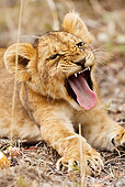 LNS 01 MC0007 01