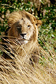 LNS 01 MC0018 01