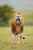 LNS 01 MC0034 01