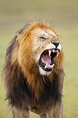 LNS 01 MC0035 01