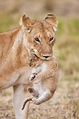 LNS 01 MH0001 01