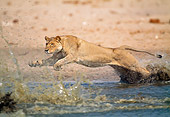 LNS 01 MH0006 01