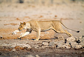 LNS 01 MH0007 01