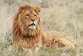 LNS 01 NE0008 01