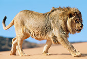 LNS 01 NE0013 01