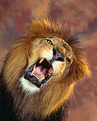 LNS 01 RK0007 33