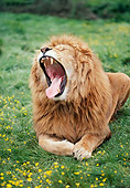 LNS 01 RK0073 06