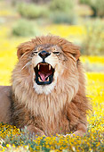 LNS 01 RK0076 01