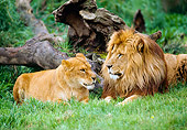 LNS 01 RK0083 01