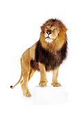 LNS 01 RK0248 14