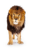 LNS 01 RK0258 01