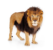LNS 01 RK0258 03