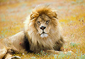 LNS 01 RK0320 18