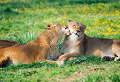 LNS 01 RK0332 02