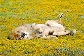 LNS 01 RK0343 02