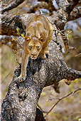 LNS 01 WF0003 01