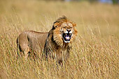 LNS 01 WF0005 01